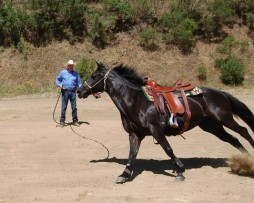 Lunging Products & Equipment
